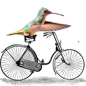 hummingbird with bicycle