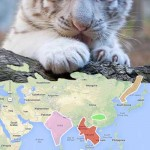 Capture Attention With Google Maps – And Tigers!