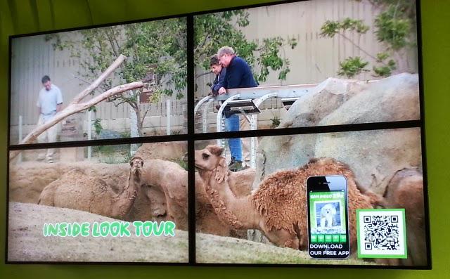 qr code, san diego zoo