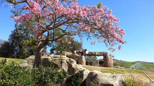 safari park elephant exhibit